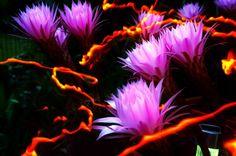 PxlShot - focul florilor de cactus | Flori