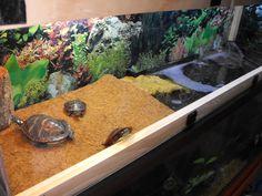 top of turtle tank Red Ear Turtle, Big Turtle, Wood Turtle, Turtle Pond, Terrarium Tank, Turtle Terrarium, Turtle Tank Setup, Homemade Turtles, Turtle Enclosure