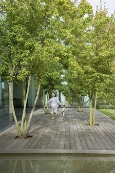 Trees through deck
