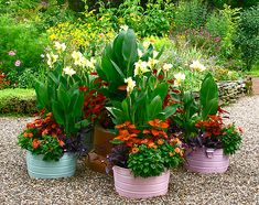 Galvanized wash tubs as planters!