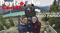 Peyto Lake, Canadá - Cara a cara com um urso pardo | Felipe, o pequeno v...