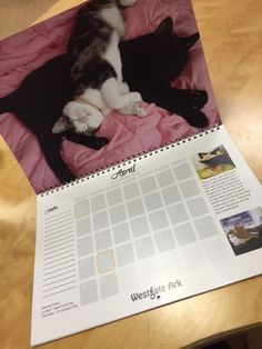 Purrrfect 2016 fundraising calendar produced for this UK Animal Rescue Centre, by teamcalendars.co.uk