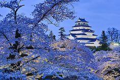 鶴ケ城と桜のライトアップ