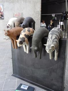 Cat sculptures - Tama Art University school festival, Japan
