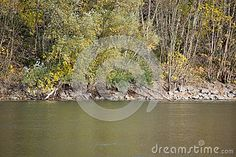 Picturesque autumn landscape of river and bright trees.