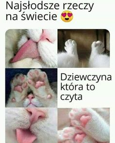 Zacznij obserwować @m3m3_more po więcej  Zostaw  jeśli się zgadzasz #śmieszne #beka #fun   Zacznij obserwować @m3m3_more po więcej  Zostaw  jeśli się zgadzasz #śmieszne #beka #fun #smiech #humor #mem #memy#polska# Cat Memes, Funny Memes, Polish Memes, Clap Clap, Happy Photos, Cute Love, Cute Wallpapers, Cute Cats, Funny Animals