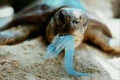 Plastic Kills SEA TURTLES– Alafair