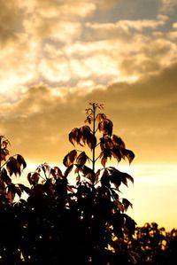 Free Golden Leaves of Autumn 2 Stock Photo Golden Leaves, Royalty Free Images, Autumn, Stock Photos, Sunset, Outdoor, Sunsets, Outdoors, Fall