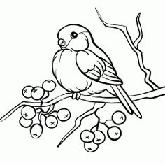 Bird Embroidery, Embroidery Stitches, Embroidery Patterns, Pencil Art Drawings, Bird Drawings, Animal Coloring Pages, Adult Coloring Pages, Victorian Christmas Decorations, Bird Cards