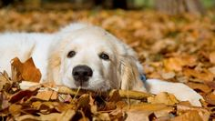 A Checklist For Prospective Dog Owners - an awesome list of things to think about before you pick out a dog!