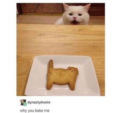 Why you bake me