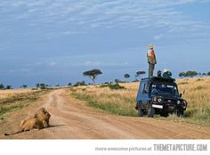 On a safari, looking for lions...