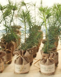 For eco-friendly DIY wedding favors, send your guests home with evergreen tree seedlings. You can purchase burlap tree kits with step-by-step instructions for planting, or create your own seed pots out of common materials like newspapers.