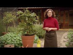 Plantando frutíferas em vaso com a herborista Silvia Jeha - YouTube