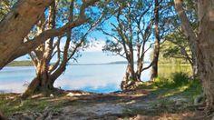 Neranie Camground, Myall Lakes National Park, NSW, Australia