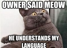 Funny cat meme meow