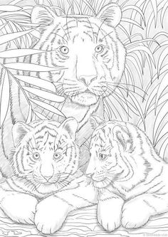 coloring pages - Tigers Printable Adult Coloring Page from Favoreads (Coloring book pages for adults and kids, Coloring sheets, Coloring designs) Animal Coloring Pages, Coloring Book Pages, Colorful Art