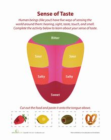 5 Senses: Taste Matching
