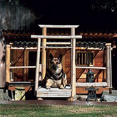 Buddy, a German shepherd mix from Bothell, WA, has a home that includes two glass windows, two insulated rooms outdoor lighting, and a partially covered deck made of split bamboo. Photo from Frank Chang.