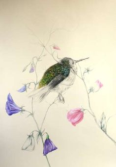 Bitter-sweet, 2012, by Louise McNaught -   50cm x 70cm -   Drawings -   Pencil and oil on emulsion paper -   £395.00  GBP -   http://www.artweb.net/art-detail/bitter-sweet