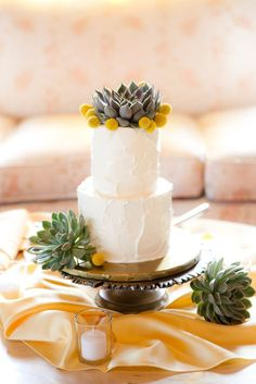 succulents on cake