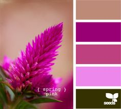 Spring Pink - Another variation on the purple theme, this time broken up with beige's and greens. An interesting and rather sultry colour palette for a bedroom. Purple Color Palettes, Colour Pallette, Colour Schemes, Color Patterns, Pink Palette, Paint Color Combos, Spring Wedding Colors, Pallet Painting, Design Seeds