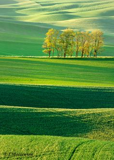 Palouse, Washington, Spring Wheat, Rolling Hills, Peaceful photo by Todd Mortensen Beautiful Nature Pictures, Amazing Nature, Beautiful World, Beautiful Landscape Wallpaper, Beautiful Landscapes, Nature Drawing, All Nature, Green Landscape, Beautiful Places To Visit