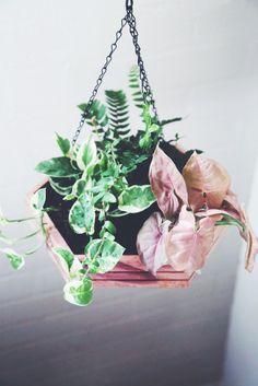 Plants | The Jungalow