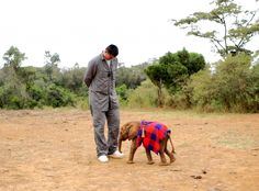 Yao Ming aims to save Africa's elephants, by persuading China to give up ivory