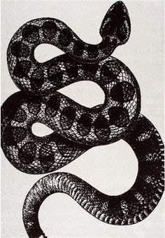 Thomas Paul Simple Serpent Black and White Rug – Amazing Rug Patterns White Rug, White Area Rug, Black And White Design, Black White, Color Black, Rectangle Area, Aesthetic Room Decor, Buy Rugs, Rugs Usa