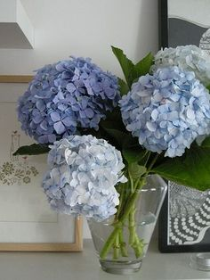 Varying shades of blue for a beautiful hydrangea flowers bouquet