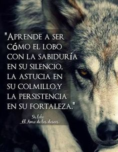 Wolf Images, Wolf Photos, Spanish Inspirational Quotes, Spanish Quotes, Men Quotes, Life Quotes, Wolf Artwork, Positive Phrases, Wolf Love