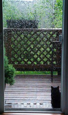 Kitty left out in the rain - poor baby! Walking In The Rain, Singing In The Rain, Smell Of Rain, I Love Rain, Rain Photo, Rain Go Away, Rain Days, Rain Storm, Going To Rain