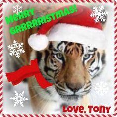 Wishing all of my pawsome furiends a very ✨✨❄️✨MERRY GRRRRRISTMAS! ✨✨⛄✨️Be good to each other and thanks for never giving up on me! ❤️ #MerryChristmas #tiger #tigers #tigertruckstop #captivetigers #louisiana #freetonytiger