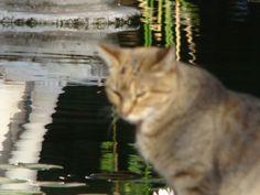 A kitten lost at Botanic Garden. Buenos Aires  - Argentina