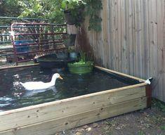 55 Inspiring DIY Backyard Projects for Your Pets and Outdoor # Backyard Ducks, Ponds Backyard, Koi Ponds, Garden Ponds, Patio Pond, Backyard Waterfalls, Backyard Farming, Above Ground Pond, Pond Cleaning