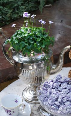 Violets Violets Violets - on coffee cups, as candy and as a pot plant in an old silver coffee pot.