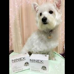 NINEX | Fortify Immunity  http://ift.tt/1S20yQa  Review by: Janice Tan  I got NINEX for Nelly because since young she has very weak stomach and poor digestive system which result in frequent vomiting of bile poop eating and yeasty paws... after 1 box of NINEX (1 sachet each day) I can see significant improvement in her stomach issue. After the 6th box of NINEX she no longer have any of these problems. Not only that NINEX also helps boost her immunity and reduce her skin allergies Nelly now…