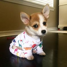 Corgie puppy in pj's - Tap the pin for the most adorable pawtastic fur baby apparel! You'll love the dog clothes and cat clothes! <3