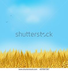 Wheat field. Light Sky and yellow wheat field. Sun rays on horizon in rural meadow. Digital painting, illustration. Wallpaper. Ecology. Ecology concept. Shavuot. Summer, Autumn, September
