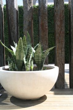 Modern pot planted to contrast with rustic timber screen. Design by RPGD.