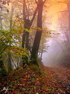 :: Autumn in Monferrato :: by Mario Spalla, via 500px http://www.winepassitaly.it/index.php/en/travel-wineries-piedmont/maps-and-wine-zones/monferrato