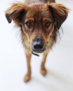 Cooper Gadehund/mix | Pawshake