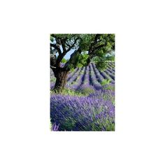 Purple and green ❤ liked on Polyvore featuring backgrounds