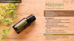 "Also referred to as ""wintersweet"" or ""joy of the mountains,"" marjoram is one of the most common herbs found in kitchens around the world. Valued for its calming properties, marjoram may be applied topically to soothe tired, stressed muscles or to support the respiratory or nervous system."