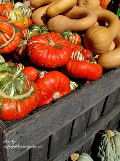 Farmstand gourds via ourfairfieldhomeandgarden.com