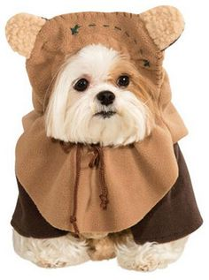 Pet safety is important on Halloween