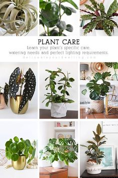 Learn plant needs, what light they like and the best water amounts. Delineate Your Dwelling