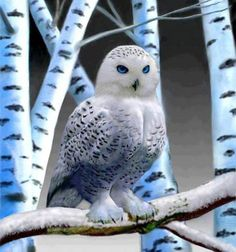 Blue eyed owl