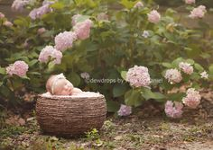 """LearnShootInspire.com """"one a day"""" by Dewdrops Photography on Facebook! #newborn #photographer"""